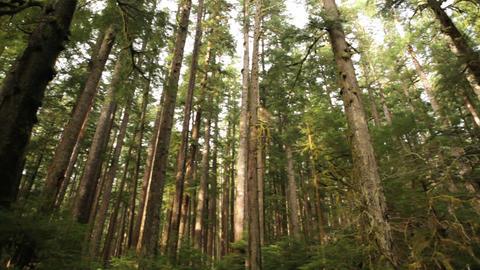 Rainforest Stock Video Footage