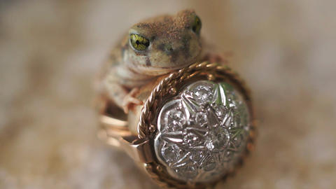 Frog Prince Ring Fairytale Fantasy Stock Video Footage