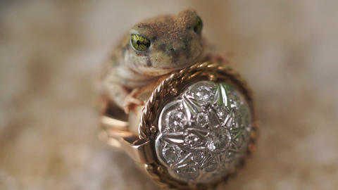 Frog Prince Ring Fairytale Fantasy Footage