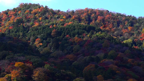 Autumn beautiful mountain in Japan Stock Video Footage