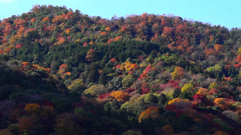 Autumn Beautiful Mountain In Japan stock footage