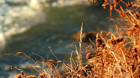 Dry grass on the beach Stock Video Footage