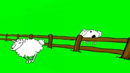 JUMPING SHEEPS Stock Video Footage