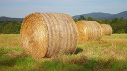 Hay bales in a meadow Footage