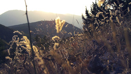 Tracking shot of magical mountain scenery with wil Stock Video Footage