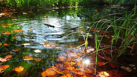 reflections are in water Stock Video Footage