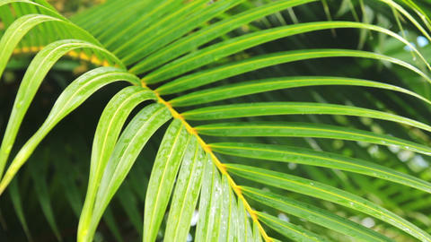 foliage of palm Footage