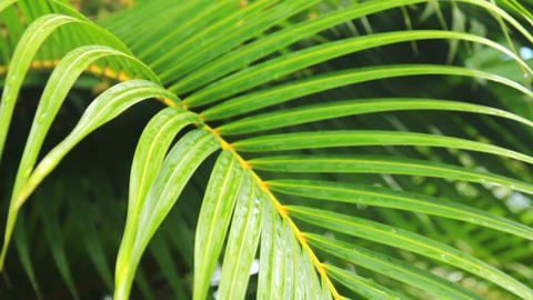 foliage of palm Stock Video Footage