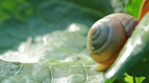 snail Stock Video Footage
