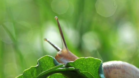 snail Stock Video Footage