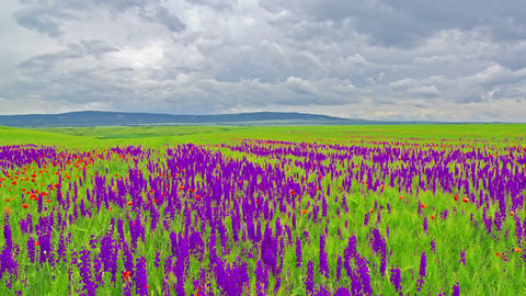 Spring flowers and a cloudy sky Stock Video Footage