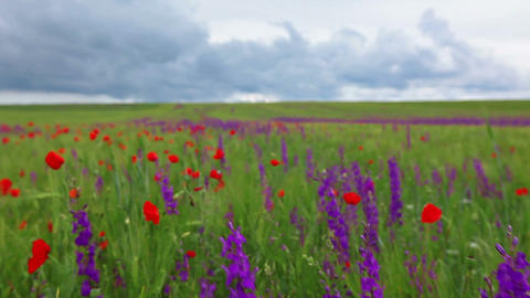 field of spring flowers Stock Video Footage
