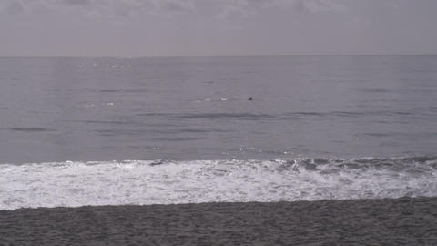 Dolphins swimming past beach Stock Video Footage
