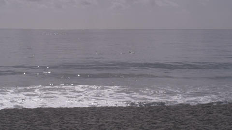 Dolphins swimming past beach Footage