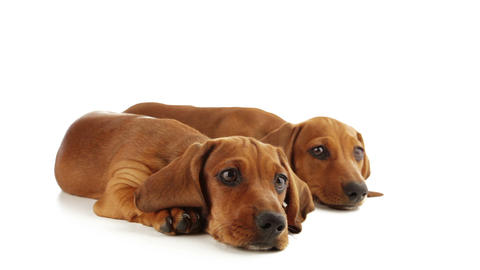 Eyes of puppies Stock Video Footage