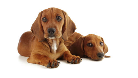 Eyes Of Puppies stock footage