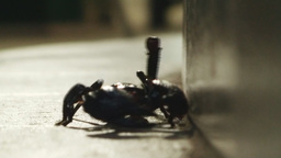 Scorpion approaching Stock Video Footage