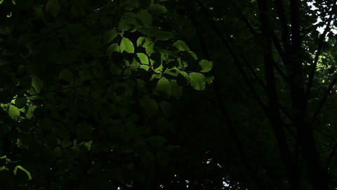 Glowing Leaves Stock Video Footage