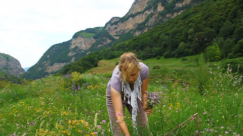 A woman collects medicinal oregano marjoram in a m Stock Video Footage