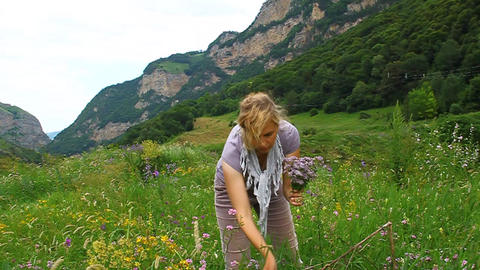 A woman collects medicinal oregano marjoram in a m Footage
