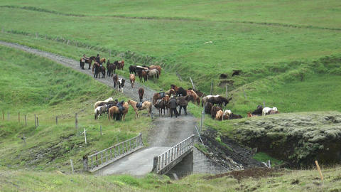group of horseman on icelandic horses Stock Video Footage