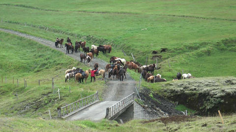 group of horseman on icelandic horses Footage