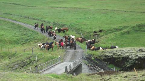 group of horseman on icelandic horses Stock Video Footage