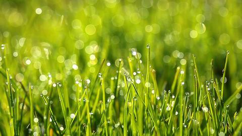 green grass Footage