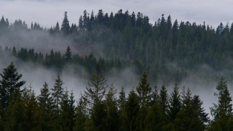 Fog And Smoke In The Woods stock footage