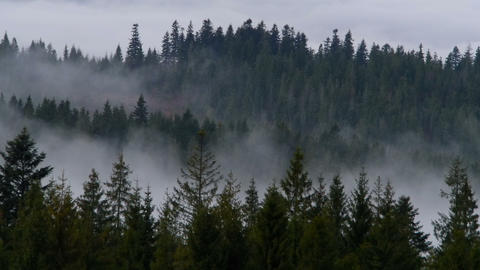 Fog and smoke in the woods Stock Video Footage