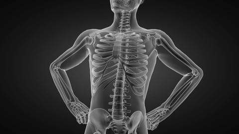 human radiography scan Animation