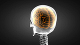 Human Brain Radiography Scan stock footage