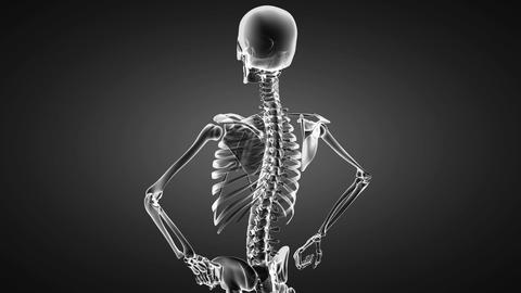 Loop rotate skeleton Stock Video Footage