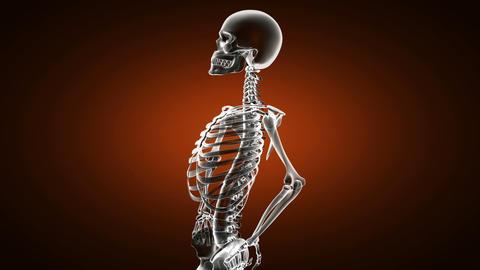 Loop rotate skeleton Stock Video Footage