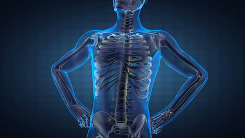 human radiography scan Animation