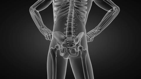 human radiography scan made in 3D Animation
