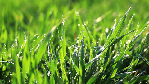 green grass - macro Stock Video Footage
