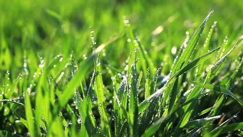 green grass - macro Footage