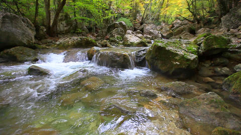 forest river Stock Video Footage
