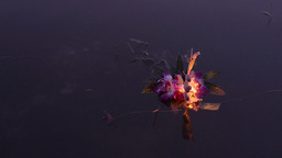 Man Floating Krathong in Pond During Loi Krathong Stock Video Footage