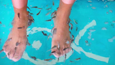 Garra rufa - Dr Fish Stock Video Footage