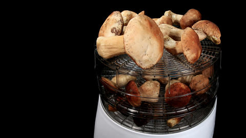 Drying mushrooms in Electric driers on the black b Stock Video Footage