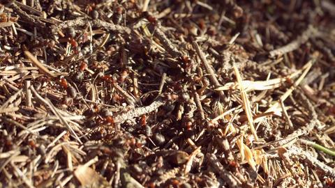 Ant life. Macro shot Stock Video Footage
