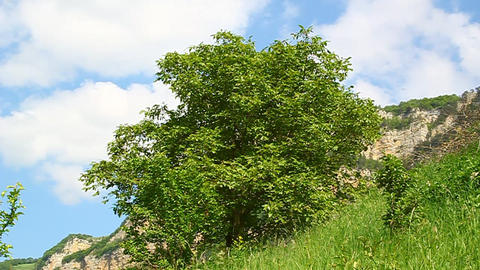 Wind shakes the tree in a mountain gorge Stock Video Footage