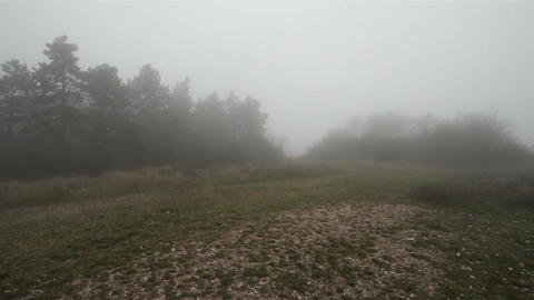 Scary Hill Foggy Forest 1 Stock Video Footage