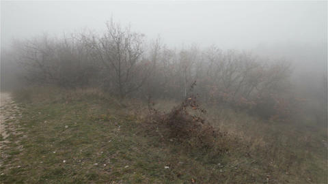 Scary Hill Foggy Forest 5 Stock Video Footage