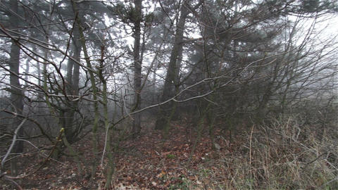 Scary Hill Foggy Forest 9 Stock Video Footage