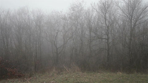 Scary Hill Foggy Forest 13 Stock Video Footage