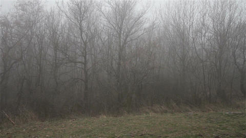 Scary Hill Foggy Forest 15 Stock Video Footage