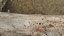Driftwood Log Macro Dolly Stock Video Footage